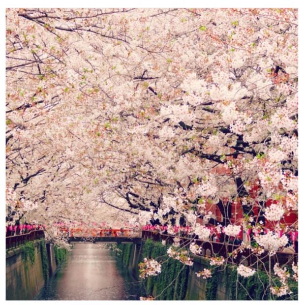 東京の桜開花予想は3月21日♡だそうですっ♡