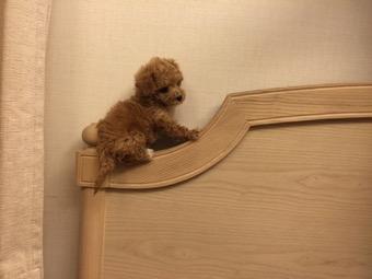 25歳男性のベッド横にクマのお人形!?