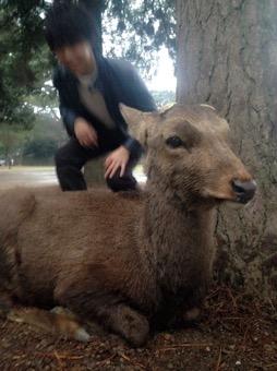 【鹿】奈良に行ってきました